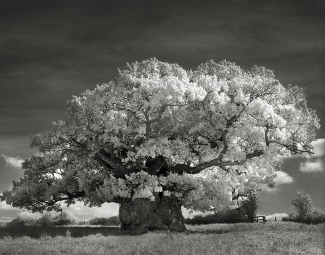 Ancient Trees, 2 by Beth Moon
